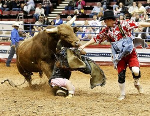 run-over-by-a-bull